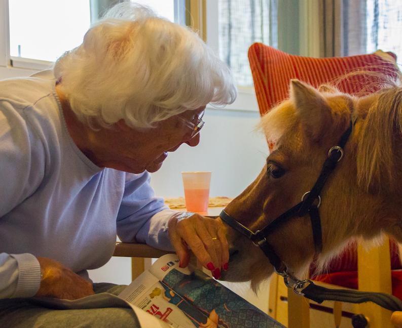 Besøkshesten, Liva vant Årets dyrehelter 2017.
